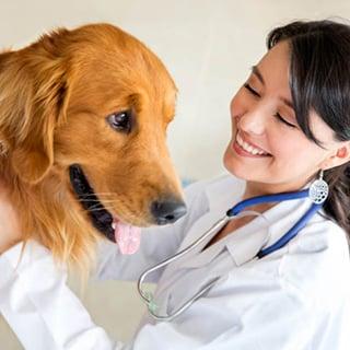 Klinik Hewan & Pet Shop